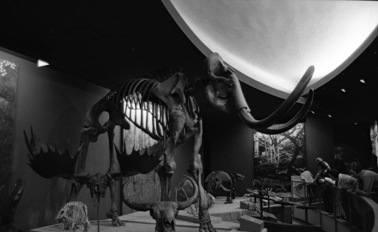 Smithsonian 14