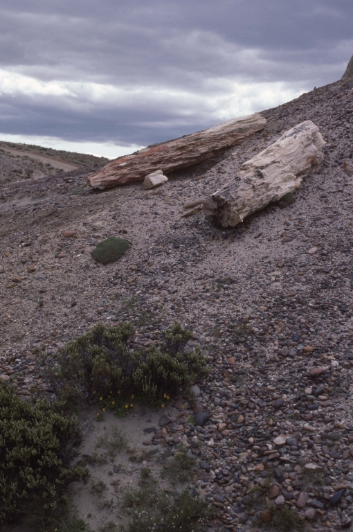 Petrified Forest-Logs